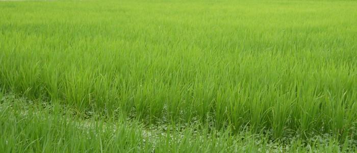 誠和会社会貢献活動-誠農社農業体験(草取り)報告