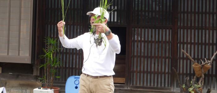 たんぼの草取り名人目指し稲とヒエの見分け方を知ろう