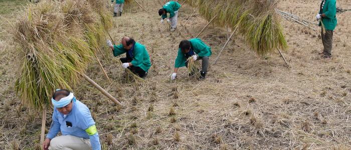 誠和会社会貢献活動-誠農社農業体験(稲刈り)報告